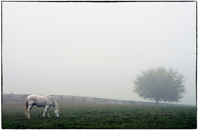 Title: FOGGY MORNING , Size: 39.5 X 60; 49 X 69 , Medium: Photograph on Paper , Price: $4,800