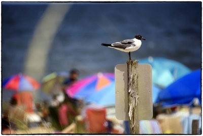 Title: REHOBOTH BOARDWALK , Size: 13 X 19.75; 24.25 X 31.25 , Medium: Photograph on Paper , Price: $1,250