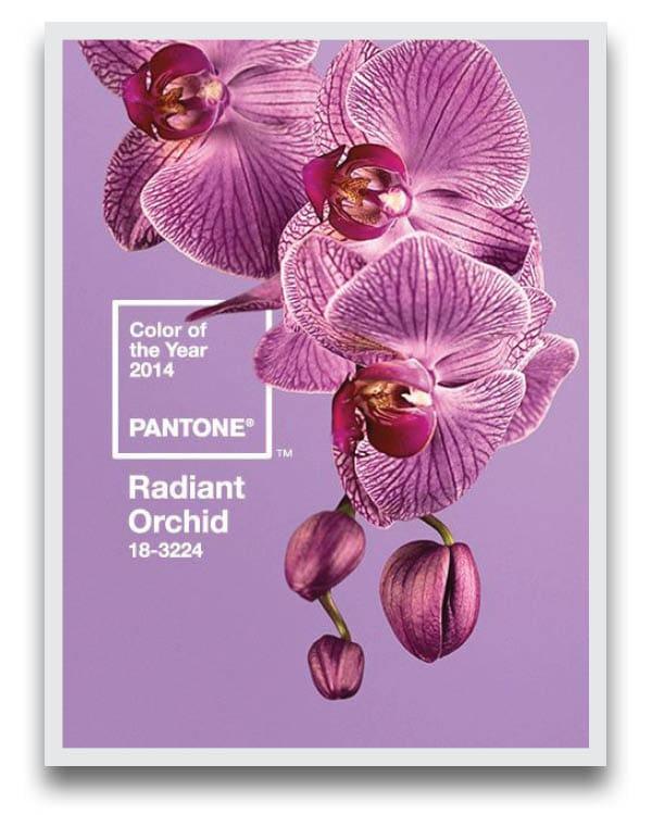 pantonecard2