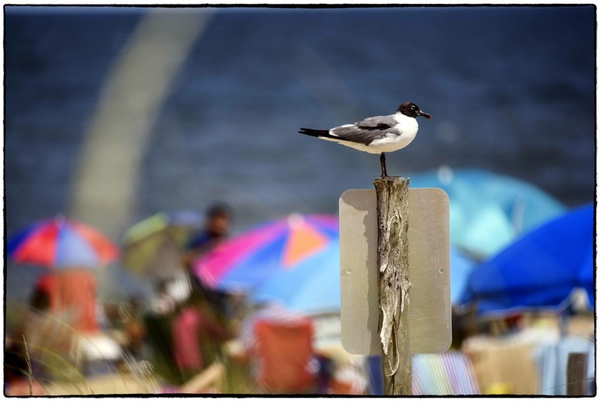 """""""Rehoboth Boardwalk"""", Photograph on Paper, Multiple Sizes Available."""