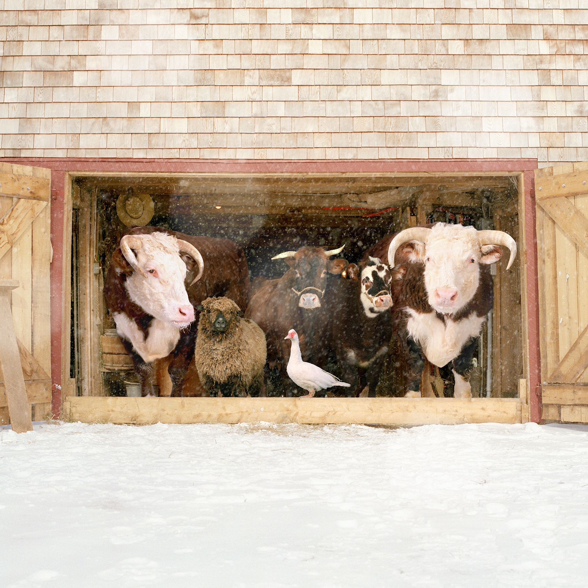 """Farm Family II"" by Rob MacInnis"